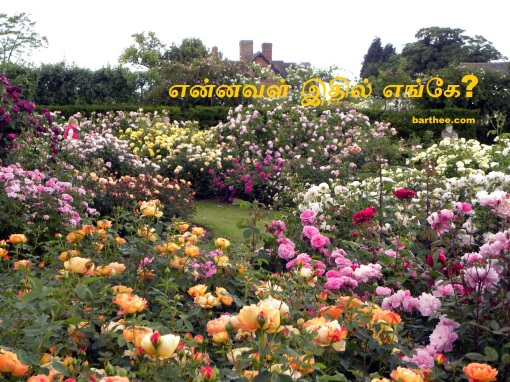 DA Rose Garden